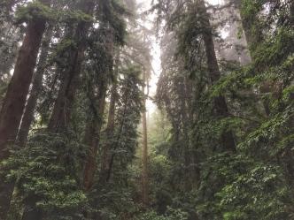 The Steep Ravine of Mount Tamalpais